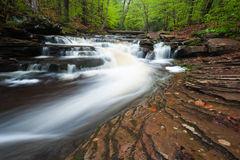 Pennsylvania Waterfall Ricketts Glen State Park Stock Photography
