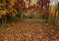 Pennsylwania sezon jesienny Obraz Royalty Free