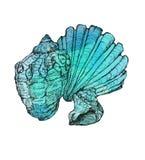 Pennteckningssnäckskal, rapavalthornssnäcka arkivfoto