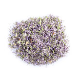 Pennyroyal isolated on a white background Stock Photo