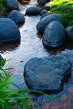 Pennys im Teich Lizenzfreie Stockfotos