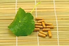 Pennywort asiatique vert (Centella asiatica) et chapeau jaune de pilule Image libre de droits
