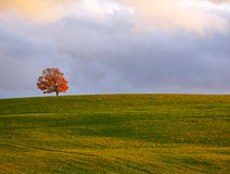 Penobsquis Lone Tree Sky Field Stock Images