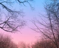 Penombra in foresta fotografia stock