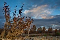 Penombra sulla riva del fiume della montagna fotografia stock
