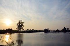 Penombra a tempo di tramonto con le risaie e l'uccello del ciconiiformes in Nonthaburi Tailandia Immagini Stock