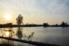 Penombra a tempo di tramonto con le risaie e l'uccello del ciconiiformes in Nonthaburi Tailandia Immagini Stock Libere da Diritti