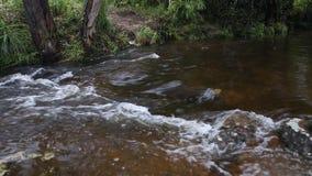 Penpobmai waterfall in Phu Kradueng National Park, Loei province, Thailand stock video footage