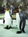 Penquins, acuario de la vida marina, Auckland, Nueva Zelanda Foto de archivo libre de regalías