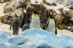 Penquins no jardim zoológico no parque de Loro, Puerto de la Cruz, Tenerife, imagem de stock royalty free