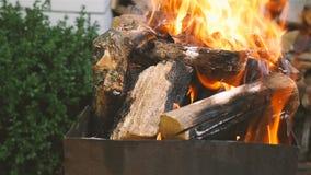 Pensée brûlante de bois de chauffage Belle flamme du feu Plan rapproché Au ralenti Appareil-photo dans le mouvement banque de vidéos
