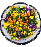Pensée de lit de fleur parterre d'hybride d'alto Photographie stock