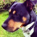 Pensées d'un chien images libres de droits