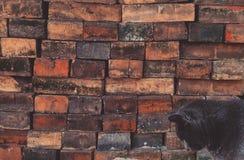 pensées de chats Image stock