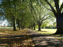Tree lined Pathway. A park pathway lined by trees with sunlight casting shadows on the path Stock Photo