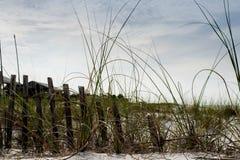Pensacola Beach, Florida, USA. Pensacola white sand beach in Florida (USA).  Sand dunes and foliage along beach with  local saltgrass foliage Royalty Free Stock Photos