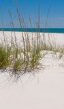 Pensacola sand dune Royalty Free Stock Photos