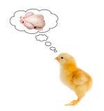 Pensamiento asustado polluelo amarillo en su futuro Fotos de archivo libres de regalías