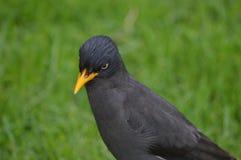 Pensamiento del pájaro Imagen de archivo libre de regalías