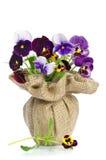 Pensamientos hermosos en un florero Imagen de archivo libre de regalías