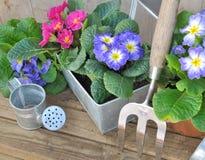 Pensamientos y accesorios florecientes del jardín Fotografía de archivo libre de regalías