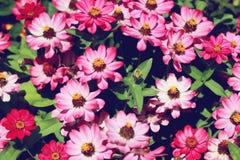 Pense flores cor-de-rosa, bonitas do rosa do verão fotos de stock royalty free