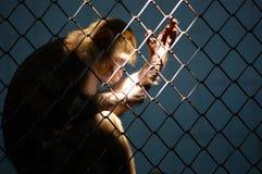 Penseur dans un zoo image libre de droits