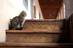 Pensieri del gatto Immagine Stock