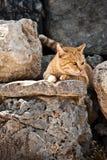 Pensiero del gatto Fotografia Stock