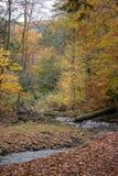 Pensilvânia Ricketts Glen State Park Landscape Fotografia de Stock