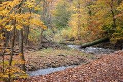 Pensilvânia Ricketts Glen State Park Landscape Imagem de Stock Royalty Free