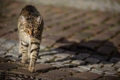 pensionär y för stående för kuzia o för 12 katt royaltyfri fotografi