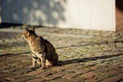 pensionär y för stående för kuzia o för 12 katt arkivbilder