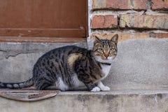 pensionär y för stående för kuzia o för 12 katt Royaltyfria Foton