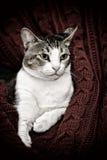 pensionär y för stående för kuzia o för 12 katt Arkivfoton