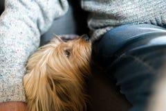 Pensionären mans handen som slås in runt om den långa haired rashunden Blond inhemsk hund bredvid äldre man hemma inomhus, mänskl royaltyfri bild