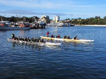 Pensionärer som paddlar långa kanoter arkivfoto