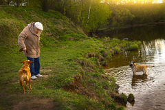 Pensionärfrau mit Hund im Park Lizenzfreies Stockbild