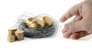 Pension Availability. Golden goose eggs placed in a authentic looking grass nest against a white background with hand reaching. Concept image for pension savings Royalty Free Stock Photo
