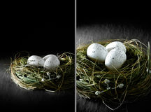 Pension Funding III. Dual image concept image for financial asset management. White speckled  eggs in a grass bird's nest against a black background. Copy space Stock Image