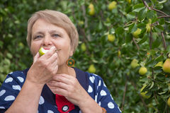 Pensioner woman eats pear under pear tree Royalty Free Stock Photo