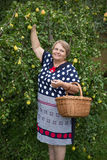 Pensioner woman under pear tree with basket Stock Photography