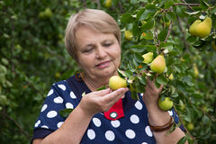 Pensioner woman under pear tree Stock Images