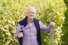 Pensionerad vinproducent Arkivfoton