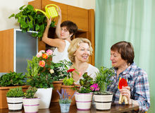 Pensioners  and girl  caring for decorative plants Stock Images