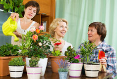 Pensioners  and girl  caring for  plants Royalty Free Stock Image