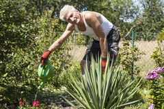 Pensioners pours flowers Stock Photography
