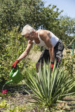Pensioners pours flowers Royalty Free Stock Images