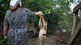 Pensionista rural idoso da mulher em sua jarda É dada boas-vindas por um cão da corrente, aumenta suas patas para sua mão Animais filme