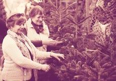 Pensionistas femeninos que compran el árbol del Año Nuevo en la feria Foto de archivo libre de regalías